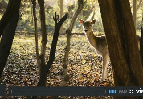 The deVOL Deer